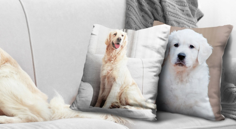 Two cushions with pictures of dogs printed on a grey sofa