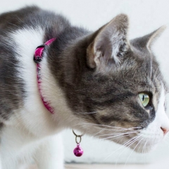 Free Cat Collar - Today Only!